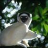 O cincime din animalele si plantele de pe planeta sunt amenintate cu disparitia