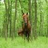 MEDIU / Vier Pfoten doreşte să transporte şi caii din Urleasca la Letea