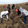 MEDIU / Peste 9000 de puieţi plantaţi la Livezile şi Dudeştii Vechi