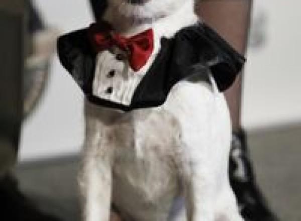 SHOWBIZ / Uggie, câinele din 'The Artist', nu va păşi pe covorul roşu la Oscar