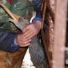 MEDIU / Vier Ptofen atrage atenţia în cazul hainelor umplute cu puf de la gâşte hrănite forţat