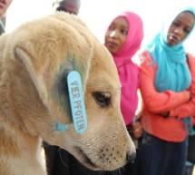 MEDIU / Misiune a veterinarilor români în Sudan