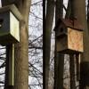 Atelier de lucru cu tematica vizand protejarea pasarilor in comuna ŞAGU, judetul Arad