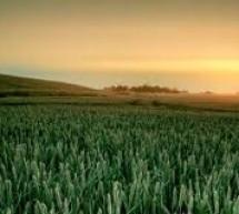 Ce să facă agricultorii în septembrie*
