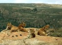 LIONSROCK – paradisul regasit, dupa o viata petrecuta la zoo