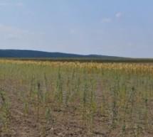 Biomasa din agricultura, sursa de energie regenerabila
