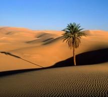 Povestea Revelatiei Sultanului Muc cel Mic cel Pilos, in pustiul Globului
