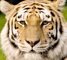 Probleme la Grădina Zoologică din Baia Mare