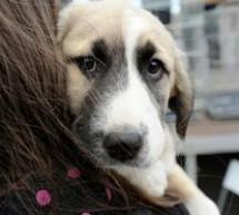SOCIAL / Votul la legea câinilor fără stăpân, amânat de Camera Deputaţilor la solicitarea liderilor de grup ai Coaliţiei
