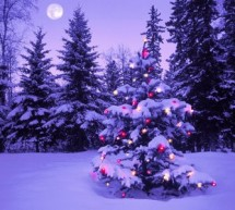 SOCIAL / Tradiţii şi obiceiuri româneşti de Crăciun