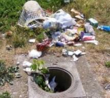 MEDIU / Acţiunea ecologică la Vinga