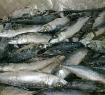 Prins cu aproape 100 de kilograme de peşte