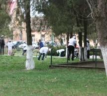 Ecologizare in comuna Vinga