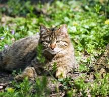 Actiune evaluare specii strict protejate – judetul Timis