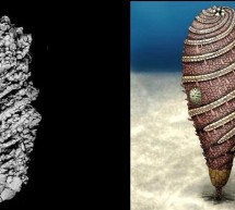O creatura bizara din marile trecutului a fost descoperita in Maroc