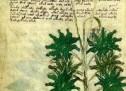 """Manuscrisul Voynich – cel mai bizar document scris din istoria omenirii"