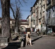 Save the Dogs: uciderea este o cruzime inutila. Singura solutie este un program serios de sterilizari