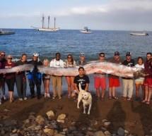 """""""O descoperire unica in viata"""": monstrul marin lung de 5,5 metri"""