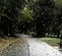 Meteorologii avertizeaza: Dupa ploi vine frigul!