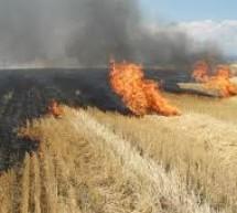 Masuri drastice pentru incendierea miristilor