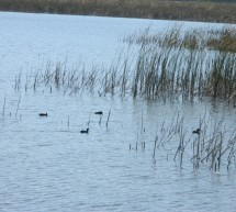 """Cercul de Ornitologie/Etologie – """"La început de iarnă se numără roadele"""""""