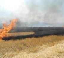Comunicat de presă privind interdicția de incendiere necontrolată a miriştilor, stufului, tufărişurilor sau vegetaţiei ierboase